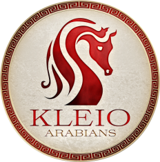 Kleio Arabians (Small)_3.png