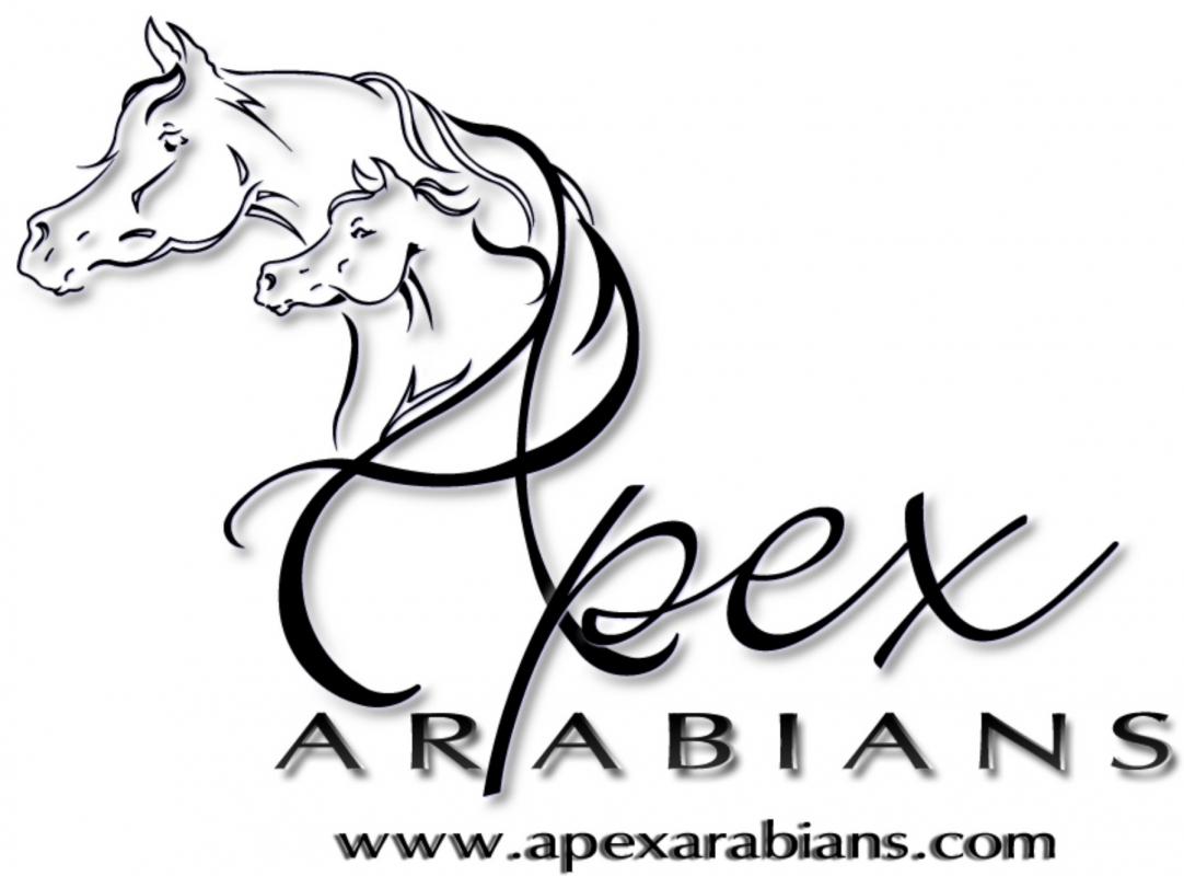 Apex Arabians The Pyramid Society