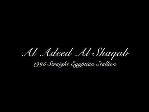 Al Adeed Al Shaqab (2013)
