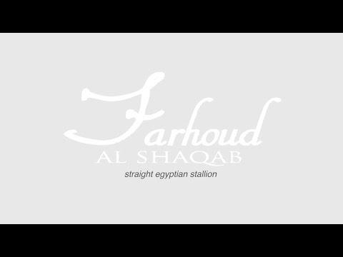 Farhoud Al Shaqab