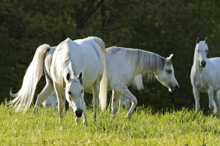 6-219_three_mares.png