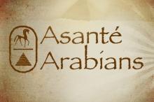 asante_arabians_new_9-2013_b.jpg