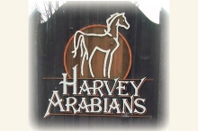 harvey_arabians_sign_nweb.jpg