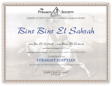 Straight Egyptian Certificates