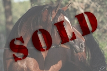 Horse and Farm Listings